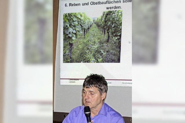 Grünpflanzen helfen gegen Erosion