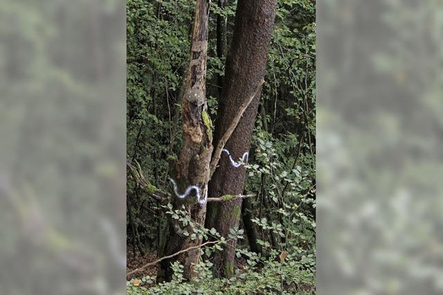 Wald-Lehrstunde aus erster Hand