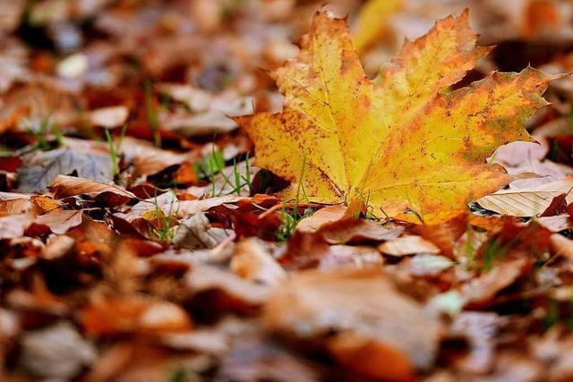 Saugen, blasen oder kehren – was tun mit dem Laub im Herbst?