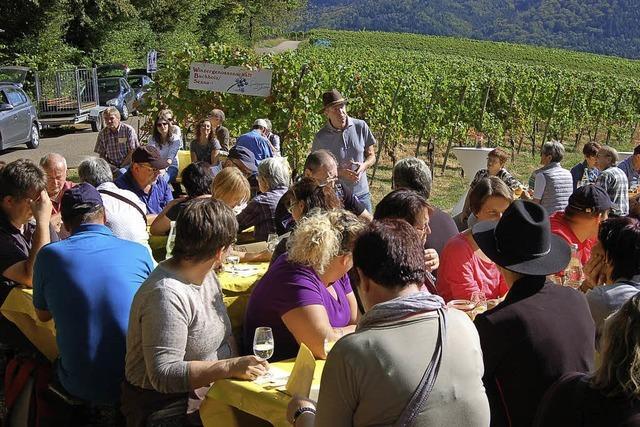 Über 200 Weinfreunde bei der 10. Buchholzer Weinwanderung