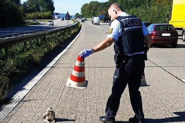 Polizisten nehmen renitenten Mäusebussard fest