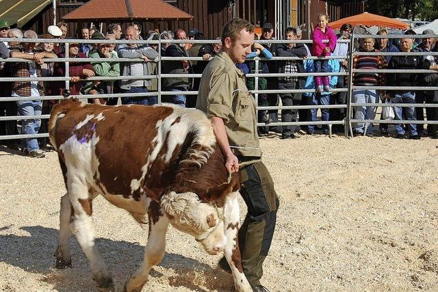 Viehmarkt mit Showprogramm