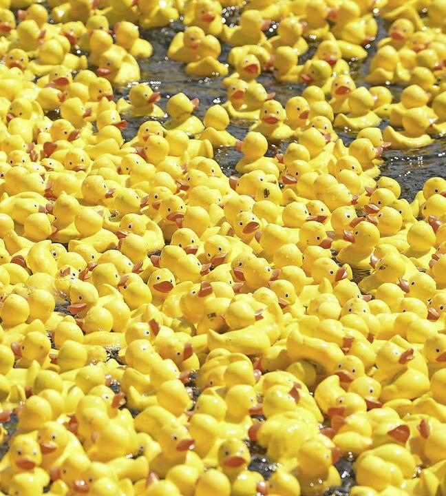 Mindestens 1500 Enten will der Kiwanis...aufsoffenen Sonntag zu Wasser lassen.   | Foto: Rita Eggstein