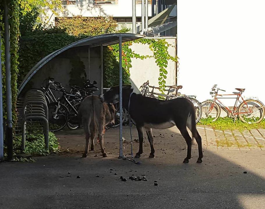 Auslöser der Debatte: die Esel auf Wanderschaft  | Foto: zvg