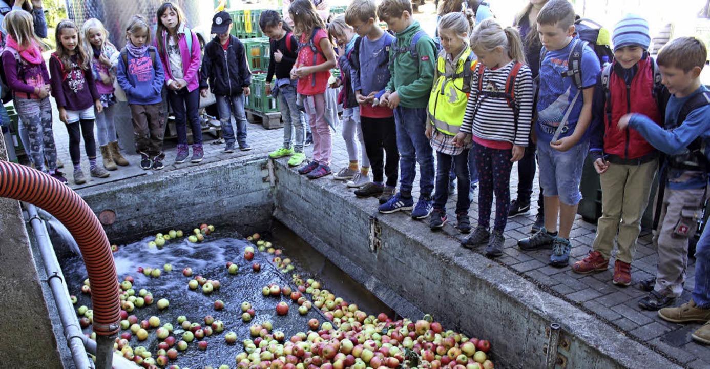 Die Kinder beobachten, wie die frisch ...Äpfel zum ersten Mal gewaschen werden.  | Foto: Erich Krieger