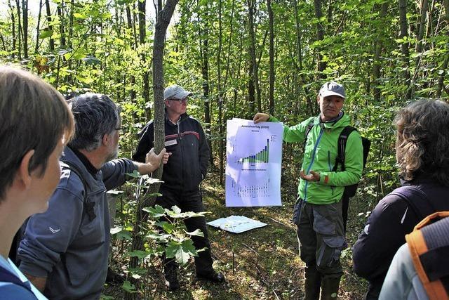 Stadt und Uni testen Baumarten für die Mooswälder in Zeiten des Klimawandels