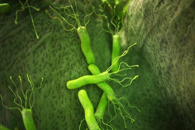 Wird die Gefahr des Magenkeims Helicobacter pylori überschätzt?