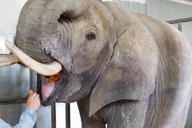 Geldstrafe für Zirkusdirektor nach tödlichem Elefantenangriff