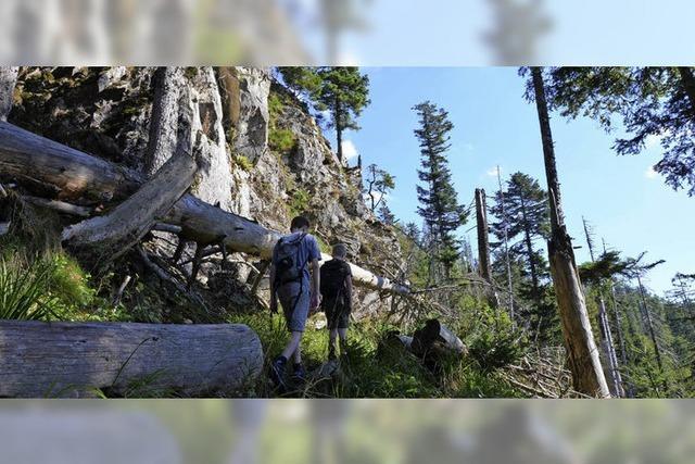 Eine Wanderung auf dem Alpinen Pfad am Feldberg