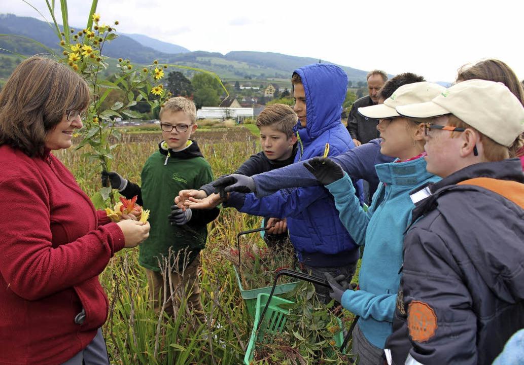 Die  Minigärtner  der  Regionalgruppe ... die  Minigärtner  selbst  rausfinden.  | Foto: Ingeborg Grziwa