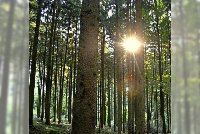 Gemeindewald soll 2017 guten Erlös bringen