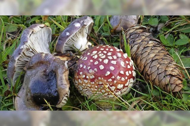 Passion Pilze