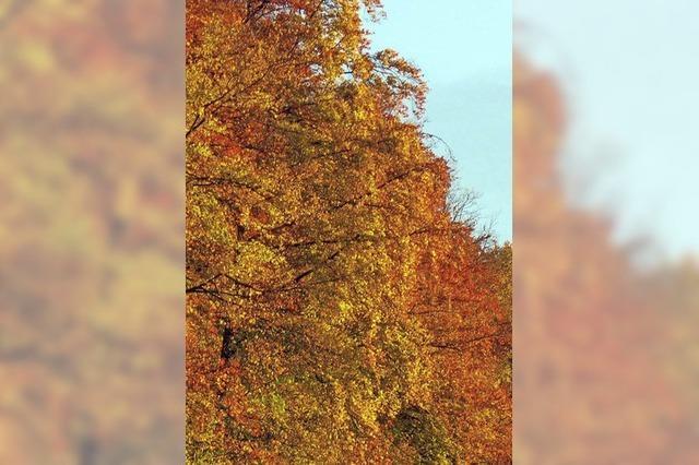 Für den Goldenen Oktober fehlt das stabile Hoch