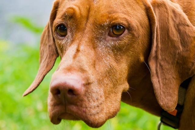 Hund verletzt sich an Köder mit Haken – Peta setzt Belohnung aus