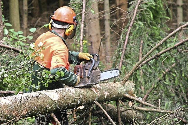 Holznachfrage wächst, Ernte sinkt