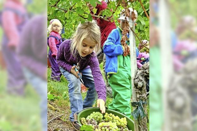 Kinder helfen beim Herbsten