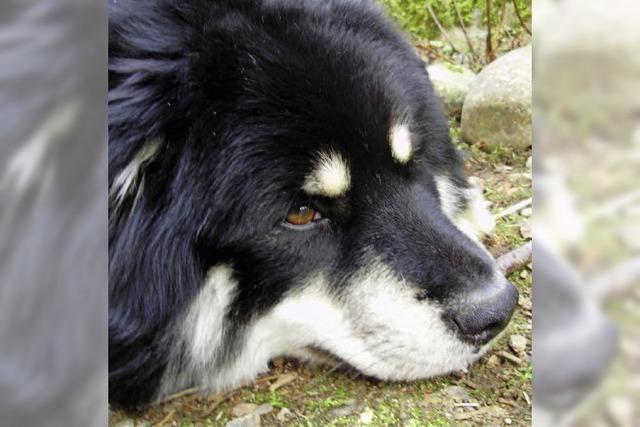Hunde können Teenagern bei der Trauerarbeit helfen