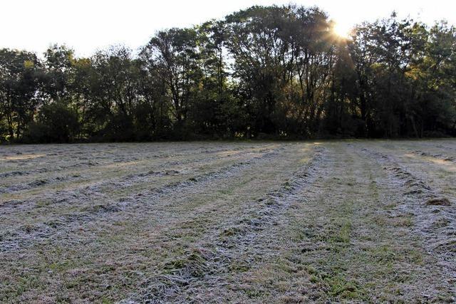 Erster Frost – letzter Schnitt