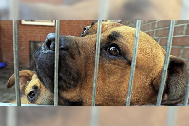 Tierschutzverein Schopfheim droht bis Jahresende die Auflösung