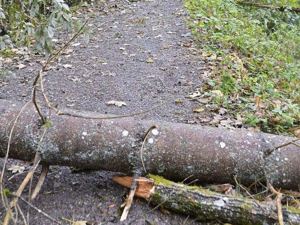 Umgestürzter Baum.  | Foto: Christian Engel