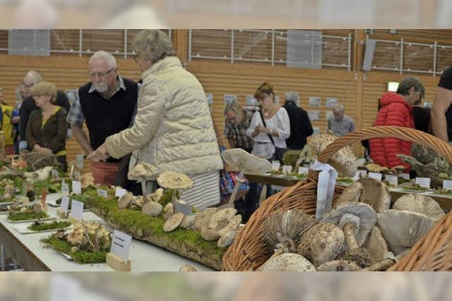 400 Pilzsorten – Hunderte Besucher