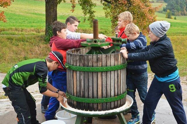 Schüler pressen ihren eigenen Apfelsaft