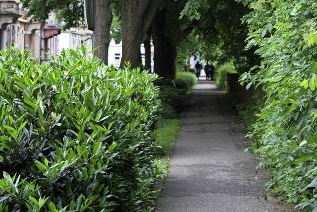 Wilhelmstraße: 21 Bäume sollen fallen