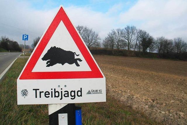 Streit um Wildschweinjagd: Wurden Unbeteiligte gefährdet?