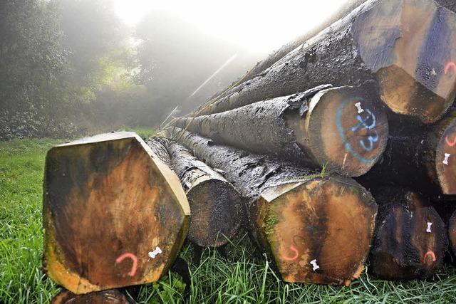 Organisationsstrukturen beim Holzverkauf auf dem Prüfstand