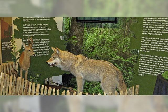 """""""…und wenn der Wolf kommt? Alte Mythen und neue Erfahrungen - in Feldberg"""