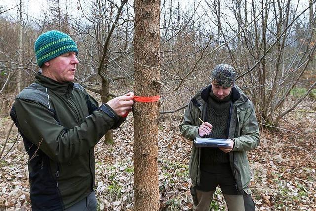 Genehmigung für Bestattungswald ist da