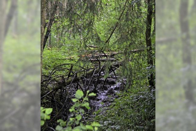 Der Wald wird zum Sorgenkind