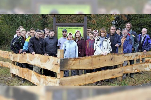 Neuer Zaun für den Galgenbuck