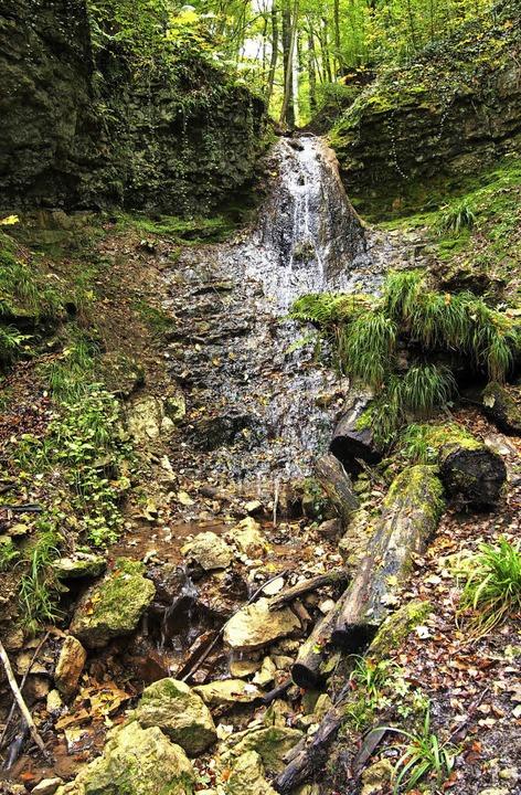 Hier im Wald zeigt der Ruschbach noch ...as sich bis zum Rhein stark verändert.  | Foto: Katharina Schiller