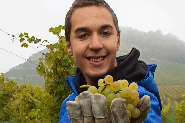 Schüler mit Behinderung helfen bei der Weinlese mit