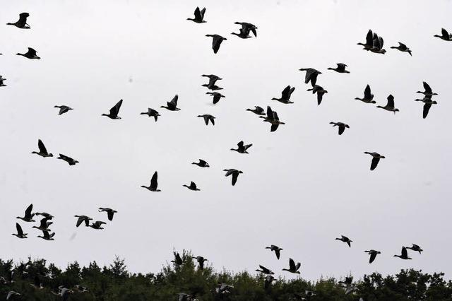 Vogelzähler müssen geduldig sein