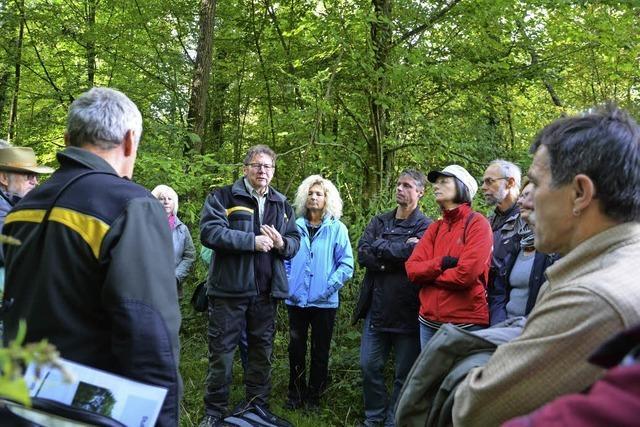 Leben und Sterben in den Rheinauenwäldern