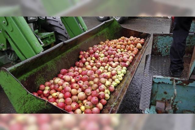 Tonnenweise Äpfel