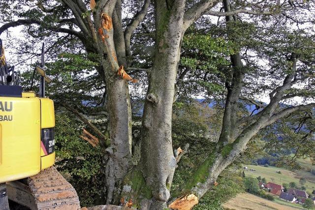 Baumaschine lädiert Baum