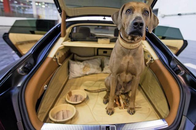 Hundekörbchen im Sportwagen