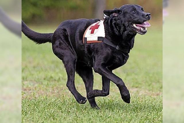 Rettungshunde im Trainingslager