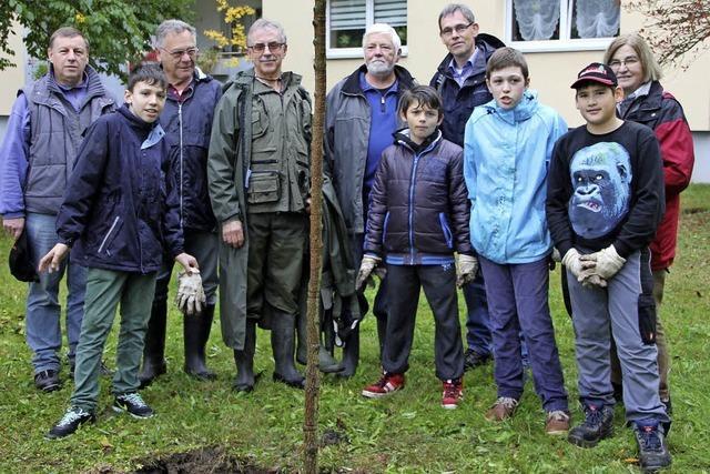 Schüler pflanzen Weiden am Gießenbach