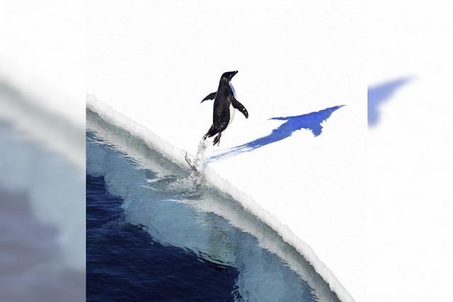 Antarktis wird Schutzzone