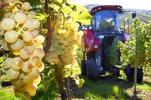 Biowinzer drohen, Wein nicht mehr nach EU-Richtlinien herzustellen