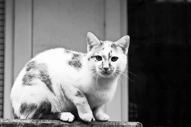 Katzen mit Giftköder vergiftet – Polizei sucht Zeugen