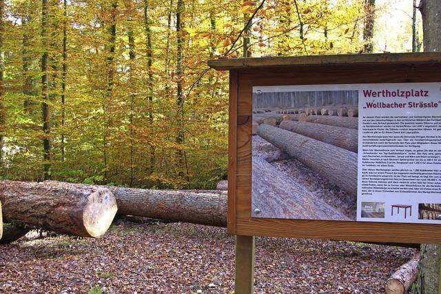 Forstwirtschaft erzielt hohe Erlöse
