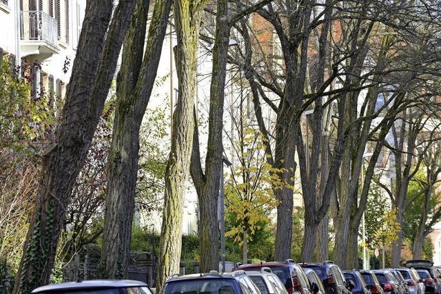 Warum das Garten- und Tiefbauamt jetzt 400 Bäume fällen muss