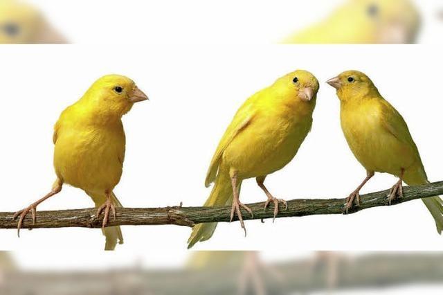 Vogelausstellung, -wettbewerb und -börse im Kurhaus