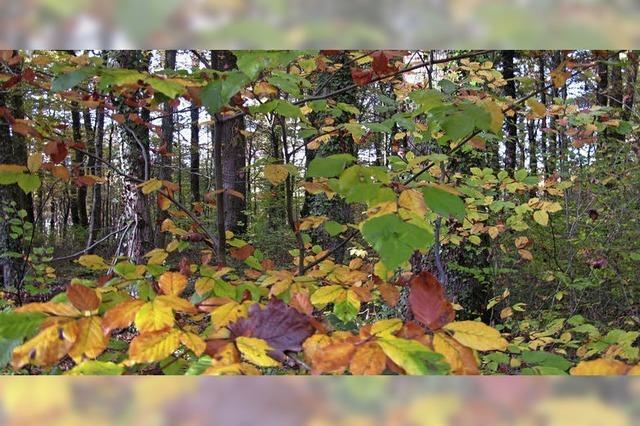 Douglasie und Eiche Schätze im Wald