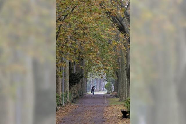 Herbstspaziergang durch Staufen